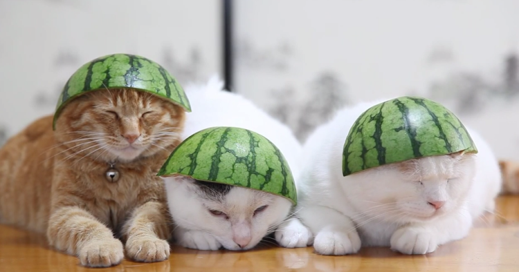 Sometimes You Just Have To Wear Watermelon Hats With Your Friends.