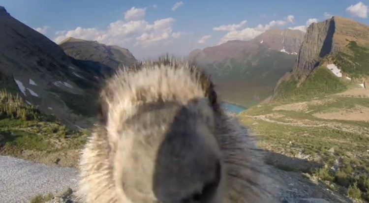 While Trying To film The Landscape, An Adorable Marmot Licks The Camera