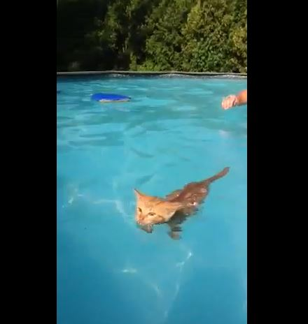 Looks Like A Cat, Swims Like A Fish