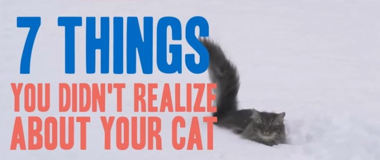 7 Things You Probably Didn't Know About Your Cat