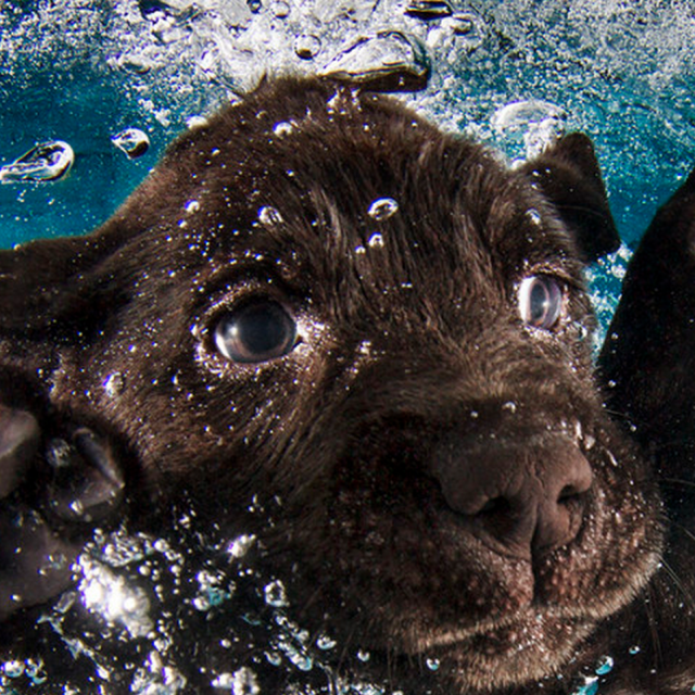 This Talented Photographer Is Back But Instead Of Underwater Dogs, His Subjects Are Underwater Puppies!