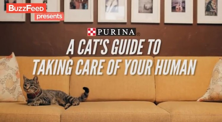 A Cats Guide To Take Care Of Your Human