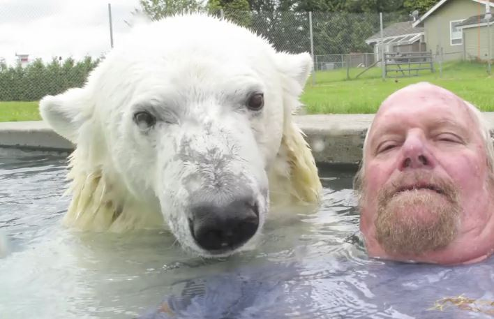 A Man's Typical Morning: Swim With A Polar Bear