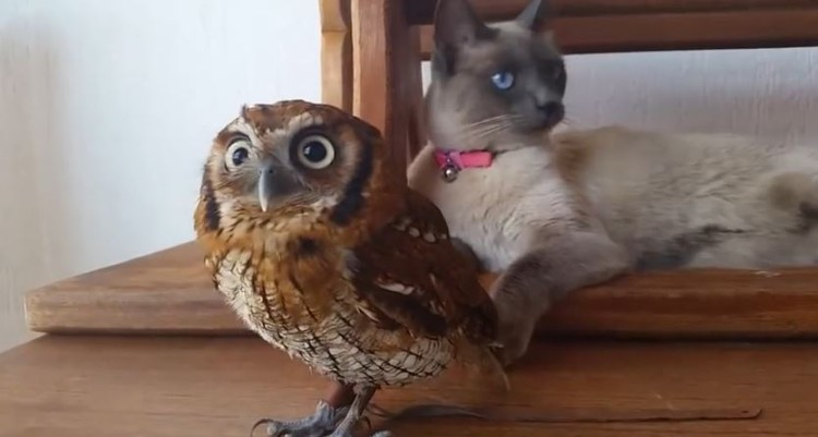 Cat And Owl Just Hanging Out