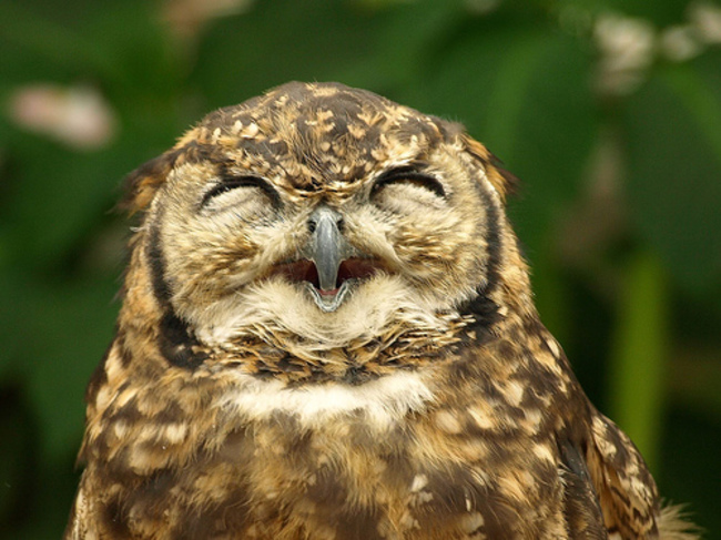 Owls Are The Most Incredible (And Cute!) Birds In The Animal Kingdom And These Photos Prove Why